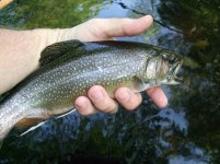 Planter Brook Trout