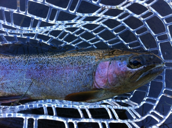 Hot Creek Rainbow