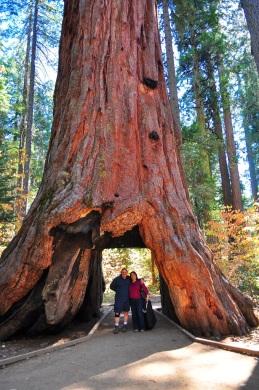 2013.10.14.Big Trees.17.Us.x