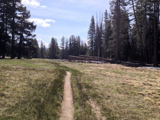 The beginning of my hike. On the John Muir Trail following the Lyell Fork of the Tuolumne River.