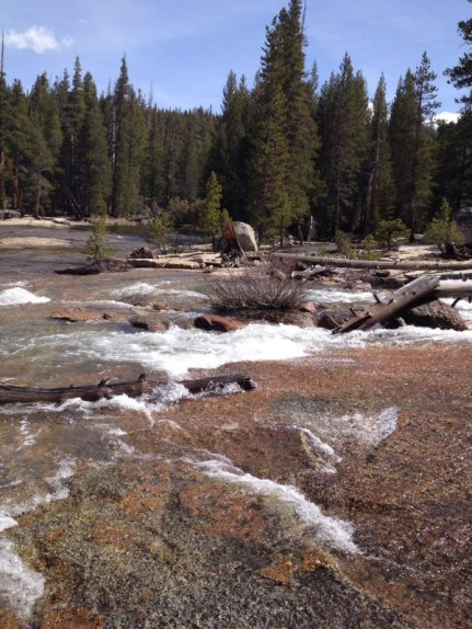 Rapids on the Lyell Fork.