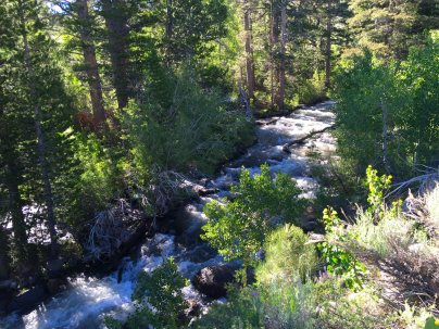 The Little Walker River not so little.